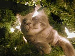 Chat et sapin 2